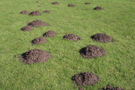 mole trap