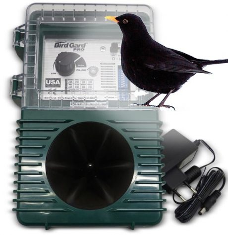 Bird control for Blackbird