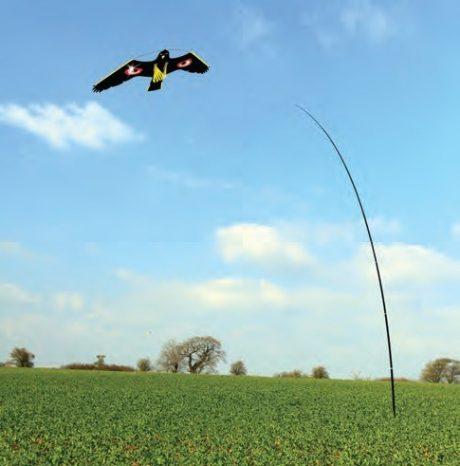 bird deterrent kite
