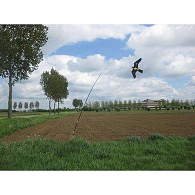 bird guard kite