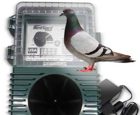 Sonic bird repellent for Pigeon
