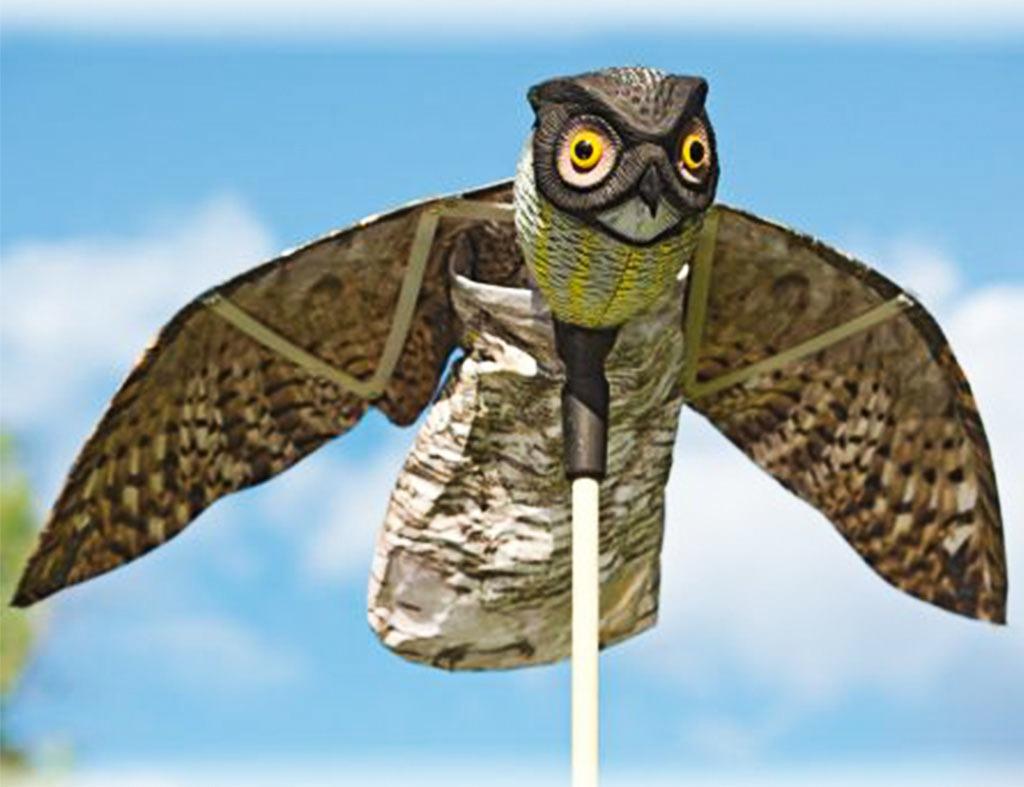 owl to repellent birds