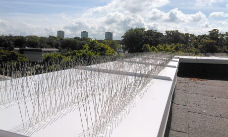 pigeon spikes installation
