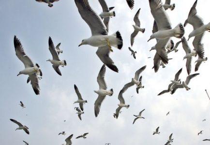 seagull repellent bird control