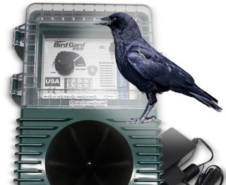 sonic bird control for crow