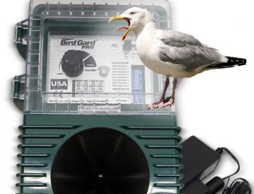 sonic bird control for seagull