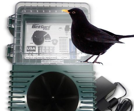 Sonic bird repellent for Blackbird
